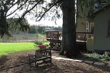 ...walk along a stone path by a big fir tree up onto an airy deck...