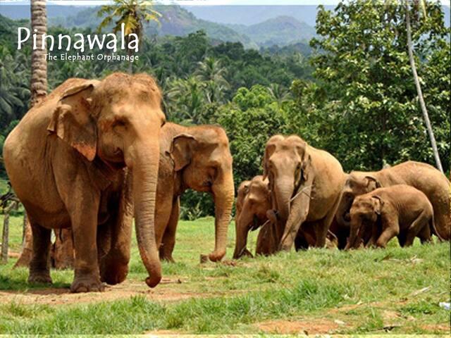 Pinnawala Elephant Nest