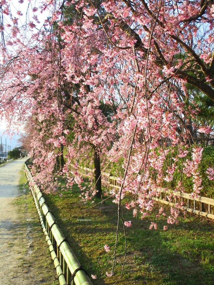 In Spring, beautiful flowers aroud store