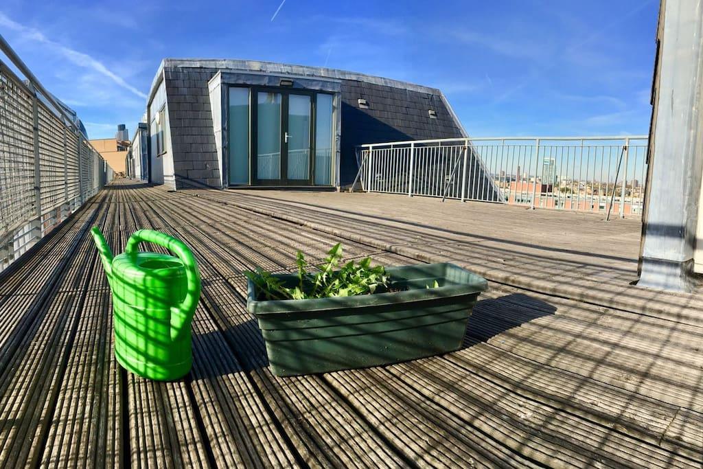 Happy plants in the sun!