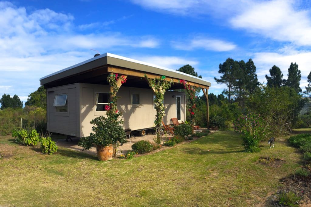 The cabin set in 1.2 hectares of fynbos.