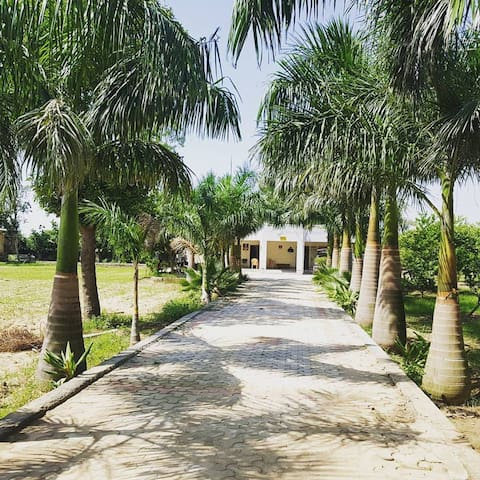 Prithvi farm-Place to experience the Village life