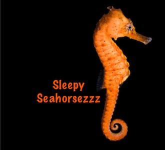 Sleepy Seahorsezzzz - 小平房