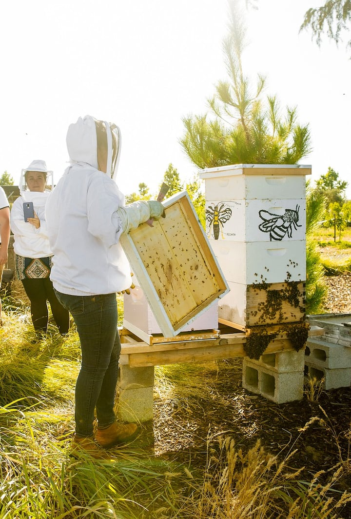 Opening the hive to see the honey bees.