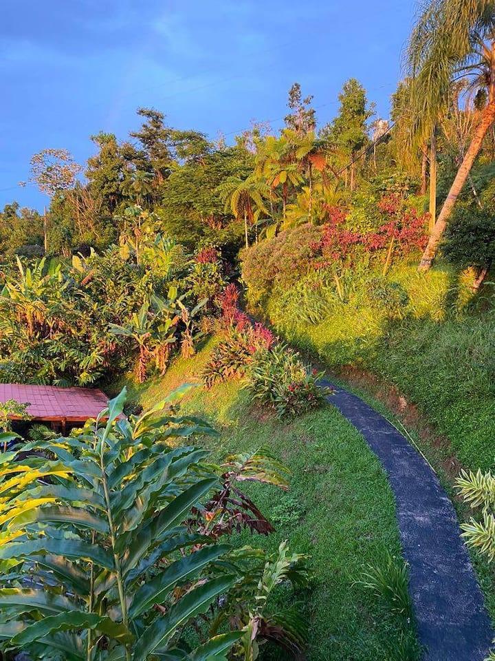Descubre el jardín secreto de Casa Jardín.