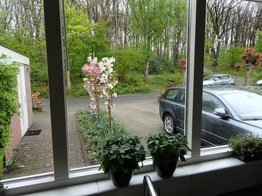 Hoekhuis bosrand / Endhouse edge wood / Eckhaus Waldrand / Maison d'angle lisière du bois    04-2017