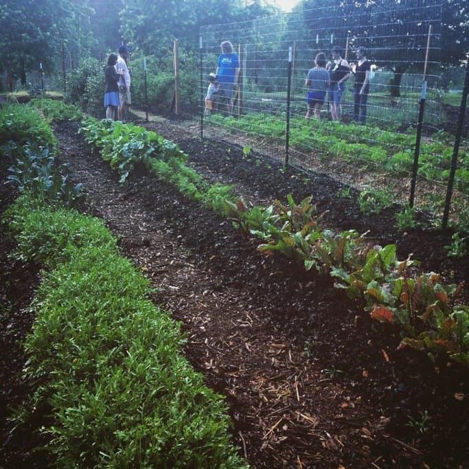 the .5 acre organic vegetable garden