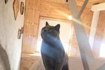 King George, our cat (in our private quarters so he won't bother you)