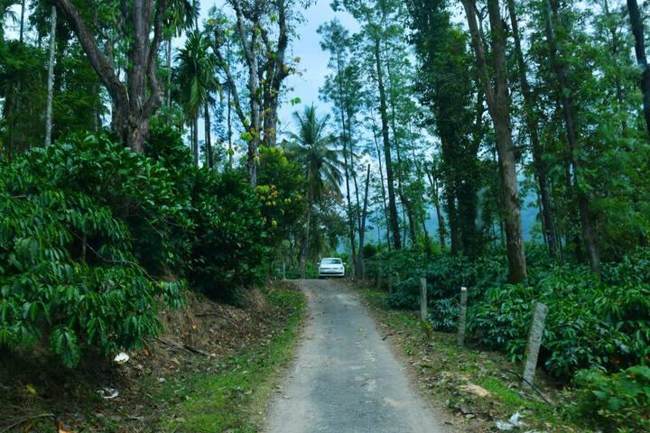 Homestay in a coffee estate - near Bhadra Wildlife