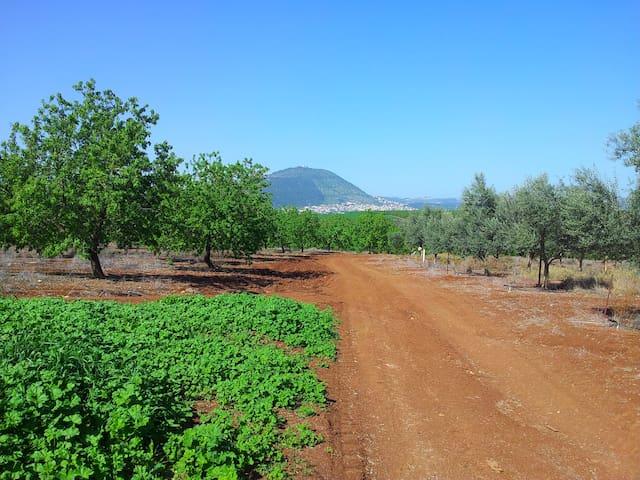 Tavor Landscape Terrace - Kfar Kisch - Flat