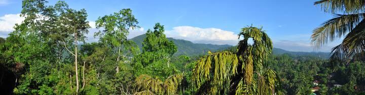Kandy Flower Garden