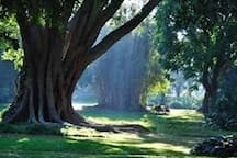 5 minute drive to Historic Durban Botanic Garden