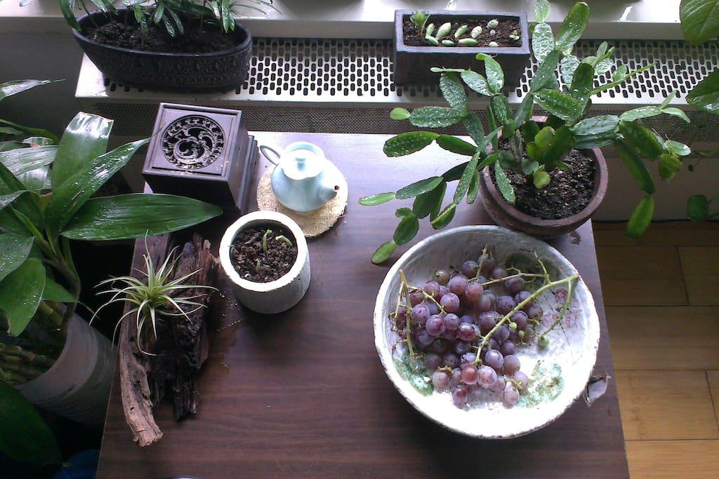 在7、8月可享用小院自己种的现摘葡萄