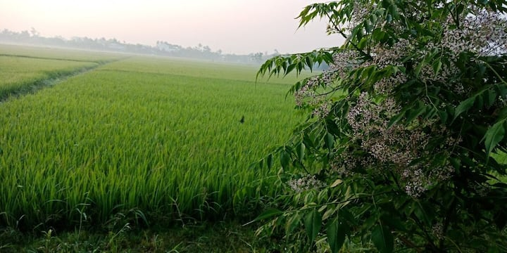 Cozy Homestay - Double room with Rice field view