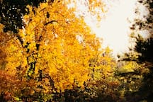 Beautiful, golden autumn at the farm.
