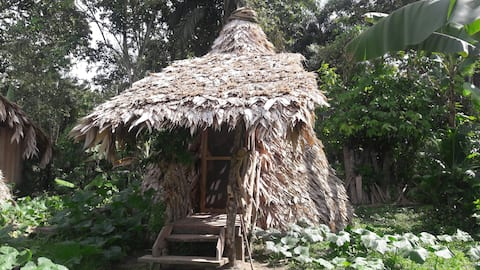 Bribri Lodge, conical shape uslê 1 (uslê cónico)