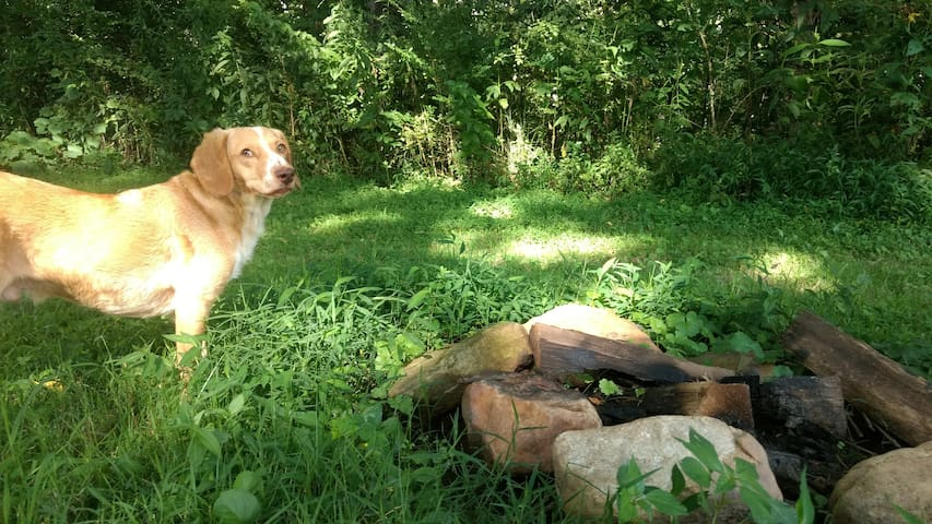 Secluded Secret Camping - Support an Organic Farm!