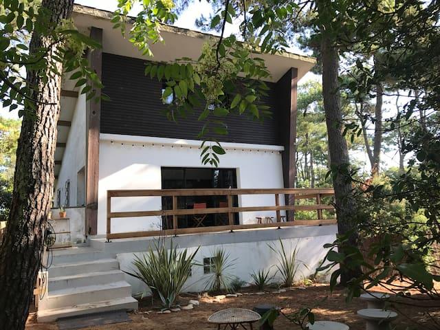 Villa d'architecte avec piscine sous les pins