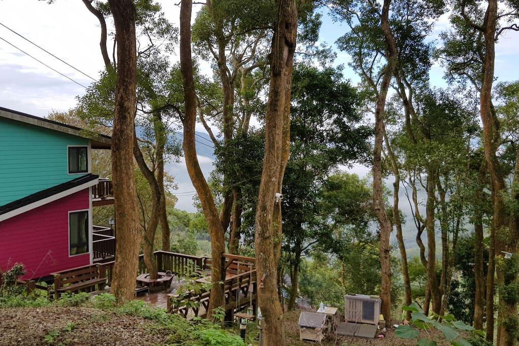 屋子整個坐落在海拔 600公尺 樟樹環繞 山林中