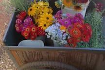 We grow and sell organic field-fresh flowers, too.