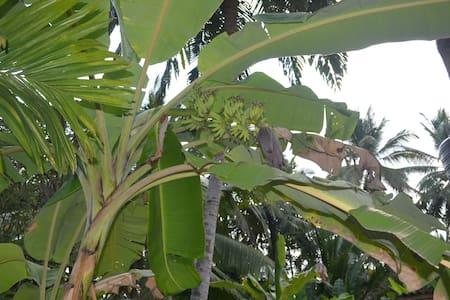 Green Leaves Garden Mawanella - Bed & Breakfast