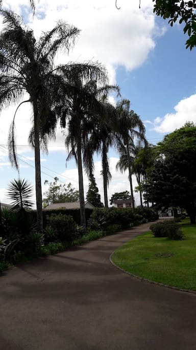 Lovely Palms adorn the long driveway