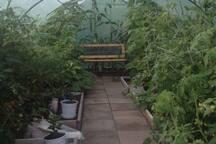 Ett av våra växthus