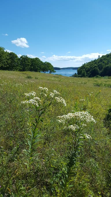 Fields and the Sheepscot River