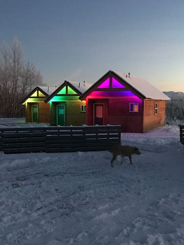 Big Lake's Aurora Lights Cabin: Moose
