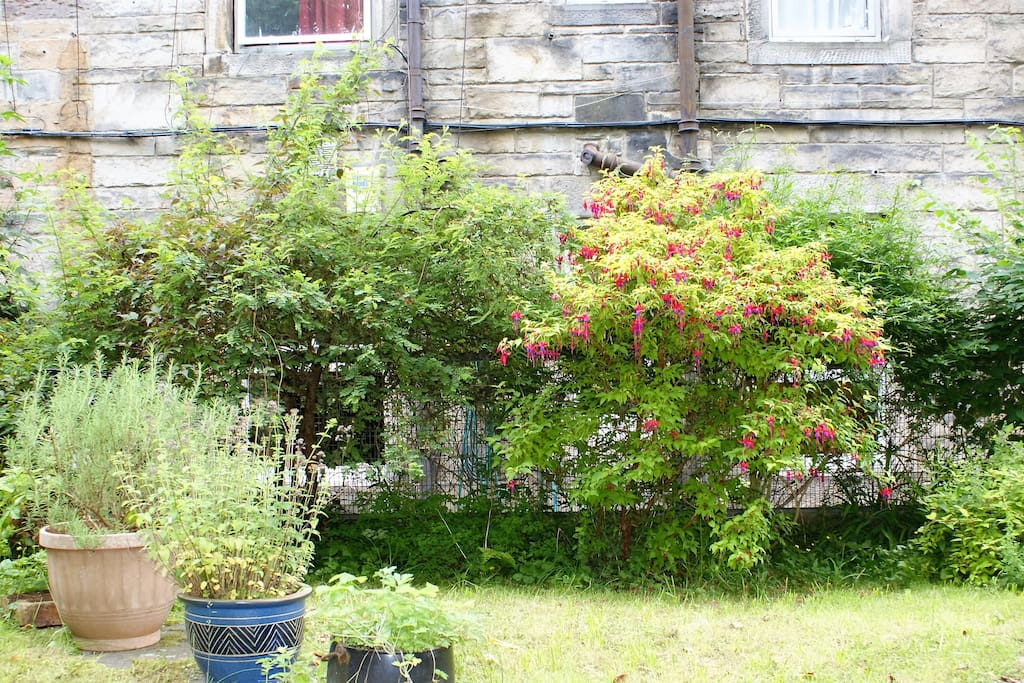 All windows face onto the shared garden, screened by rose, jasmine and fuchsia