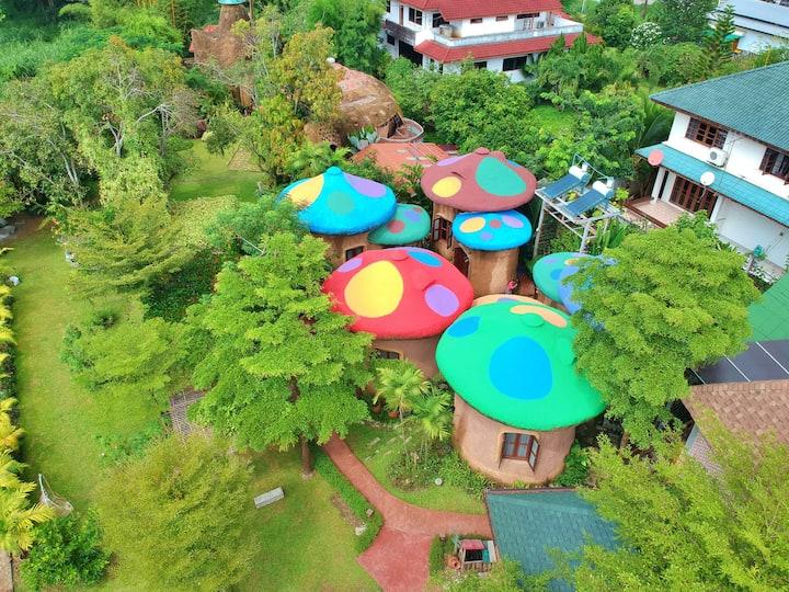 Leafy Greens Chiangmai : Mushroom M3