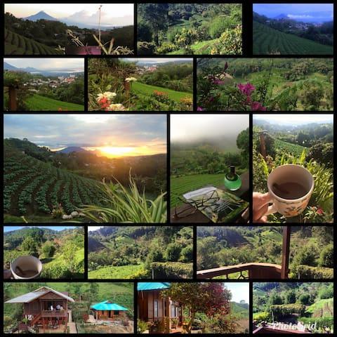 Bloomie Homestay - Rurukan Tomohon North Sulawesi