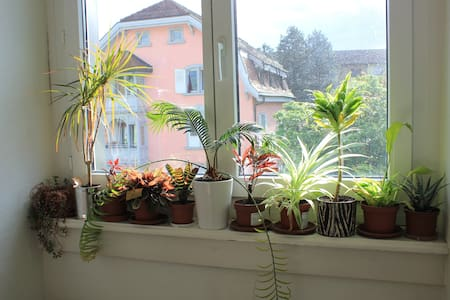 Bright, furnished double room in Zurich - Zürich