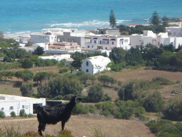 Location de vacances El haouaria Cap Bon Tunisie