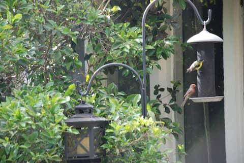 Pasadena - Birds, Butterflies, and Books