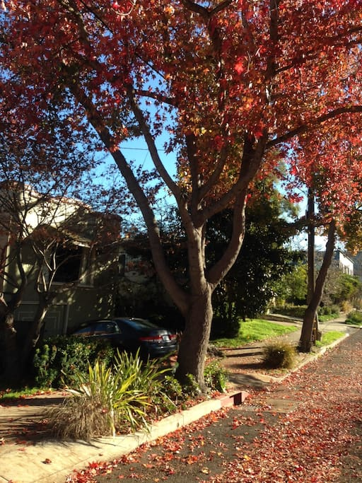 Quiet street with lots of unmetered parking