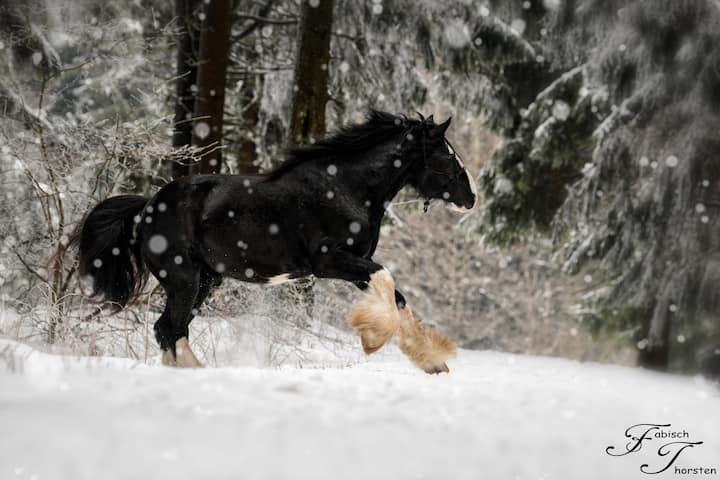 Ferienwohnung auf dem Pferdehof