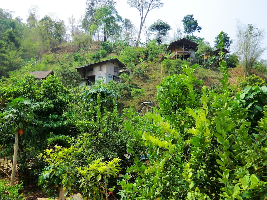 Our organic farm where visitors and volunteers stay