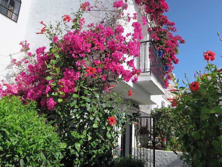 Flowers at the Pueblo Los Arcos 4 Nerja entrance
