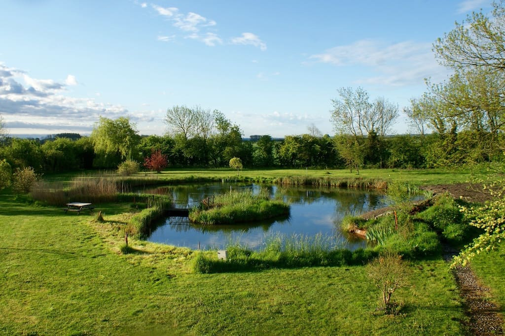 View of the pond in the rear garden