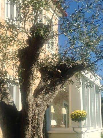 Olive Tree Room/Quarto da Oliveira