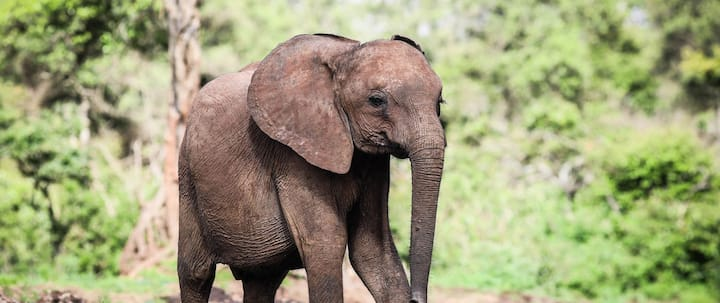 An Elephant at DSWT