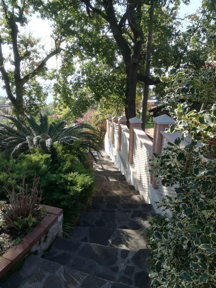 Stanza privata immersa nel verde a Maratea