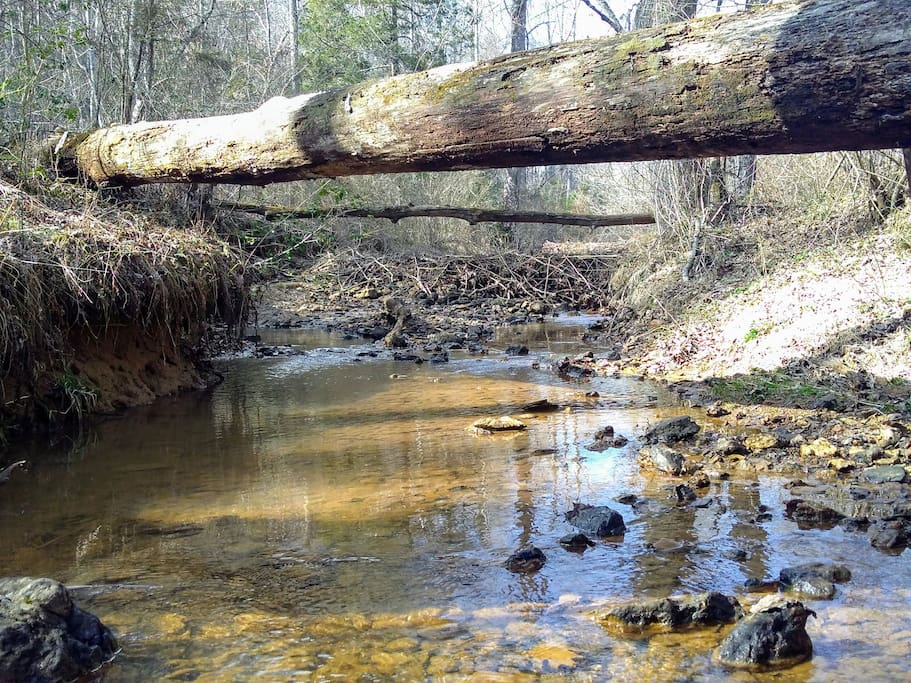 Nature Trails to a Creek & Beaver Dams