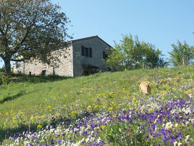alloggio in Riserva Naturale del Monte Labbro - Arcidosso - Huoneisto