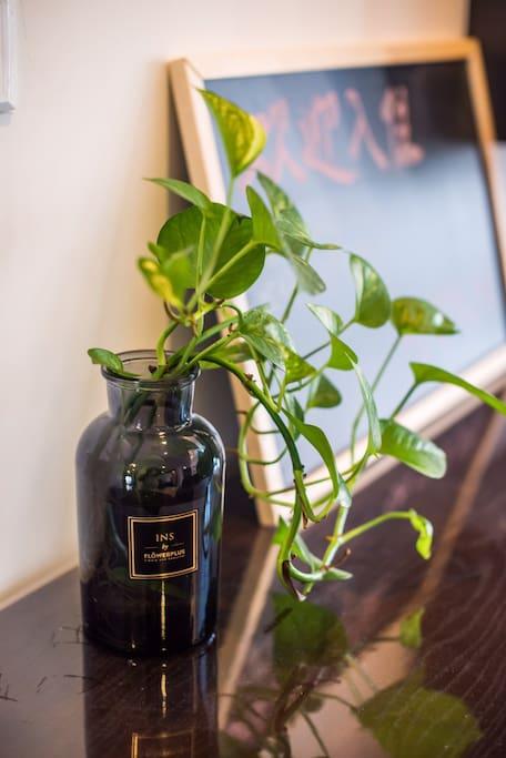 绿植让您的生活更有生机