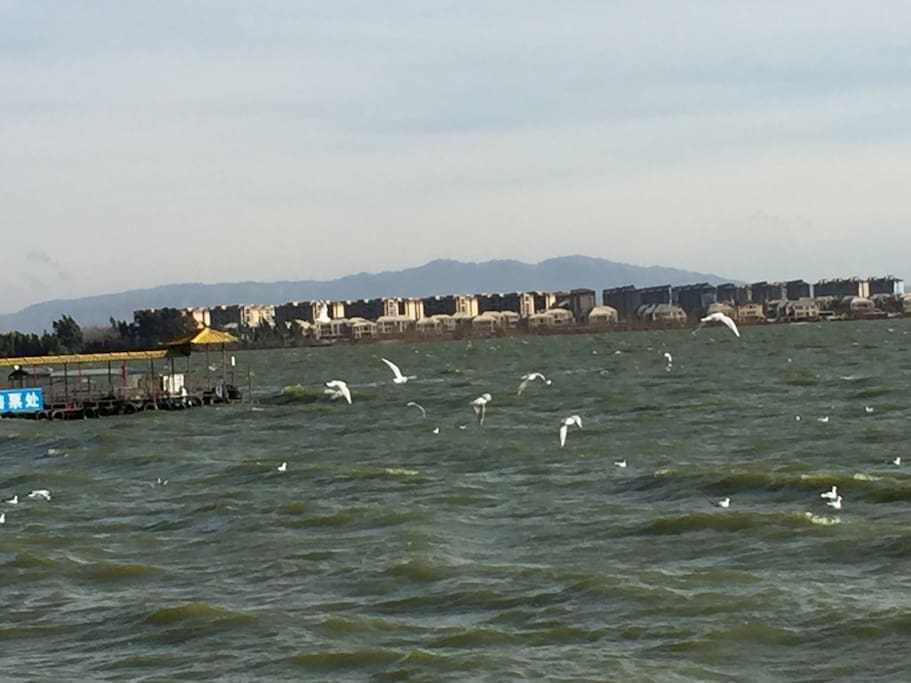 KM is the second hometown of seagulls.You will have a good time with the beautiful seagulls!
