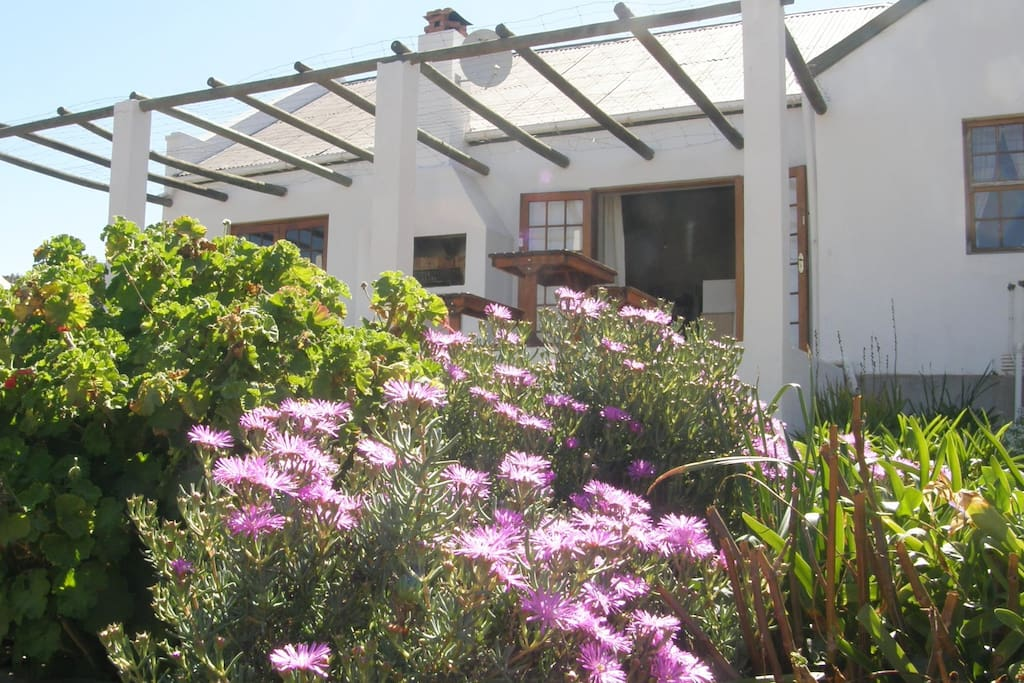 View towards patio and barbeque / braai with pink flowers in foreground