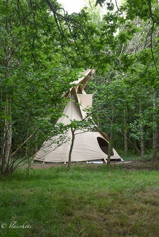 ...There is a wild and peaceful camping retreat... in your own beautiful wood...