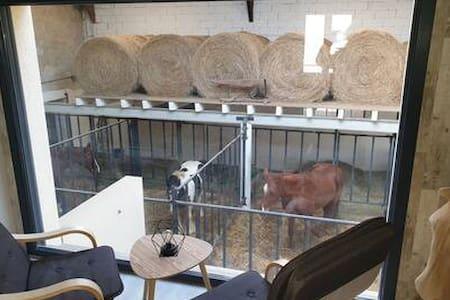 Un concept inédit en Europe dormir avec un cheval